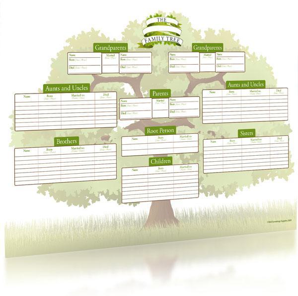 colour the family oak a3 tree chart family historian folded